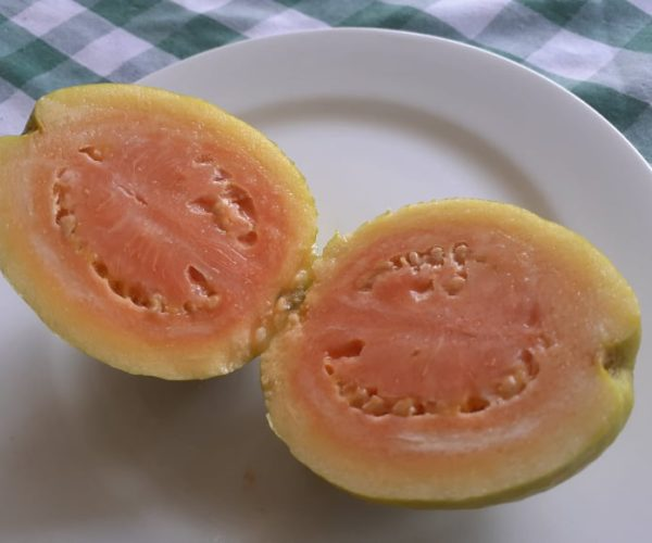Ripe Guava Organically Grown